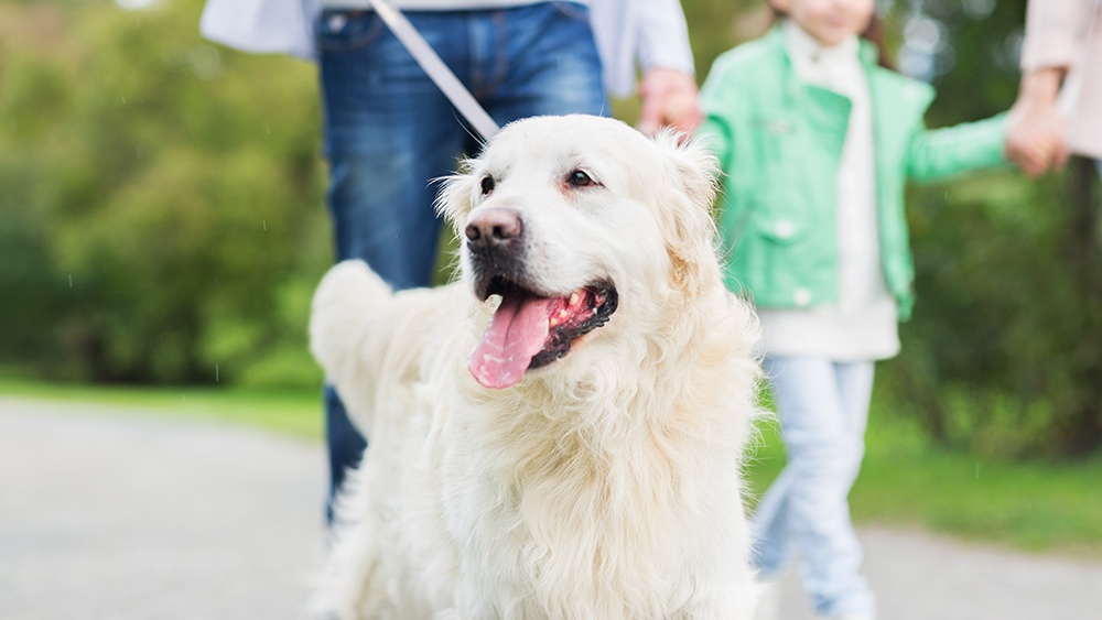 The Top 3 Pet Policy Problems (And How To Solve Them)