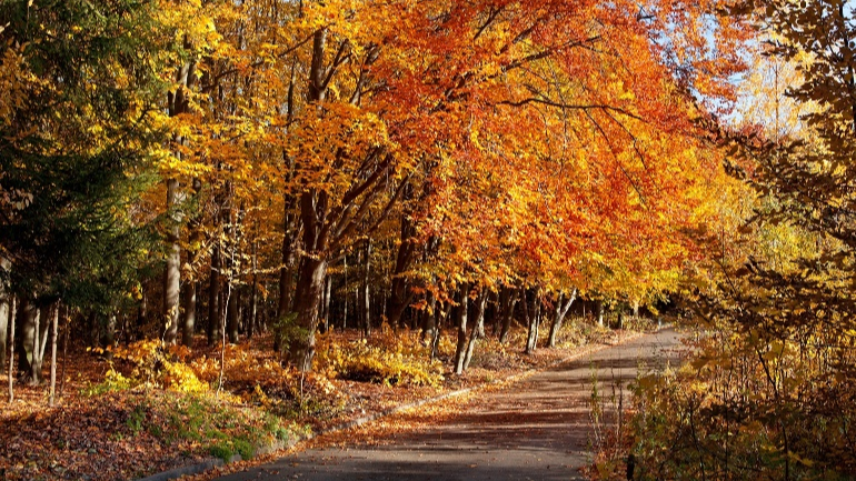 5 Steps to Pinteresting Your Fall Road Trip